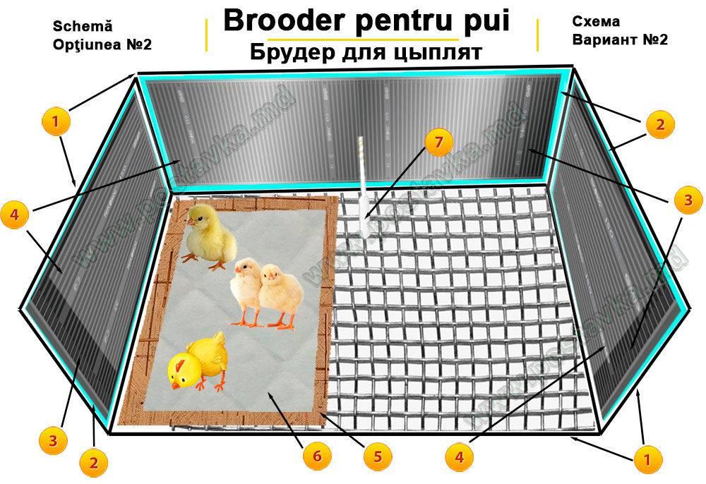 Системы и правильный режим обогрева цыплят