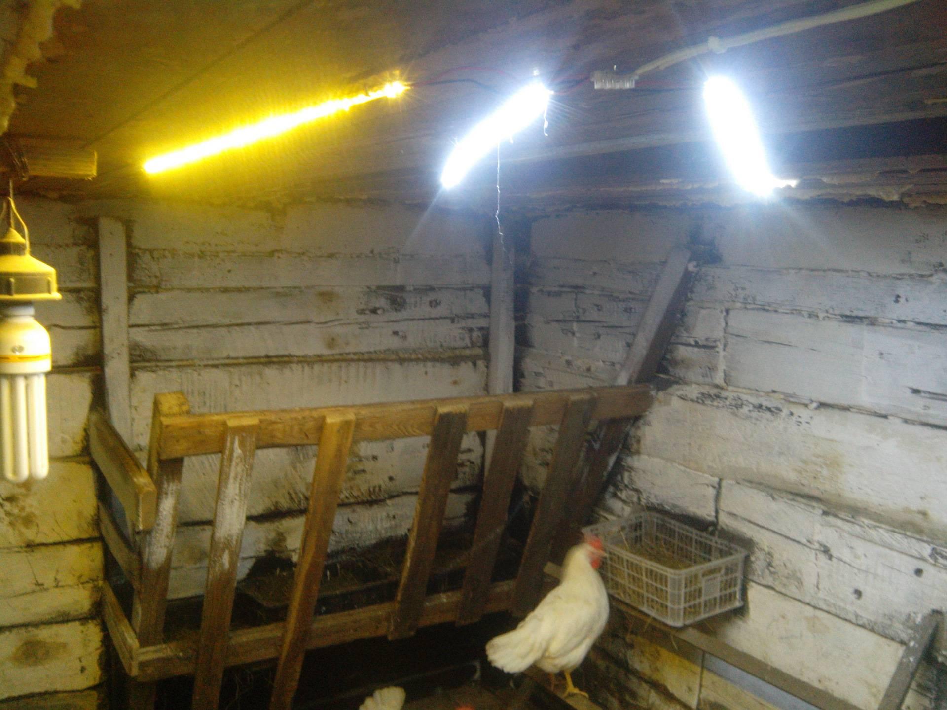 Варианты обогрева курятника зимой инфракрасными лампами