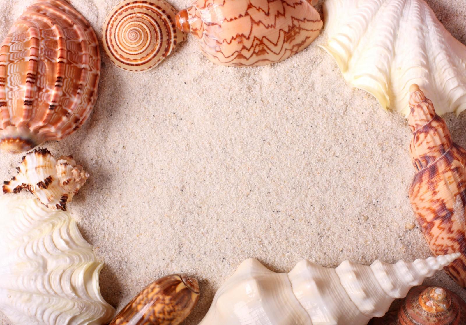 7 способов украсить квартиру с помощью морских ракушек