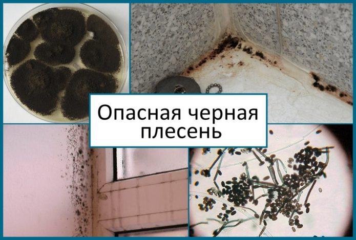 Черная плесень в доме: чем опасна для человека и почему появляется грибок?