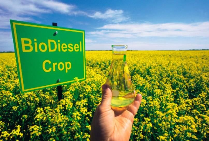 Как сделать биотопливо своими руками