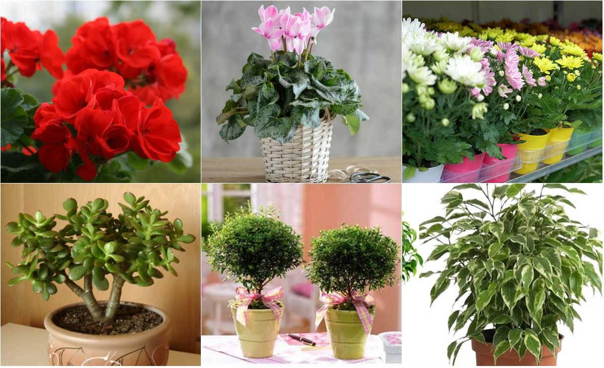 Можно ли держать в доме искусственные цветы - прирметы, суеверия и подробные толкования
