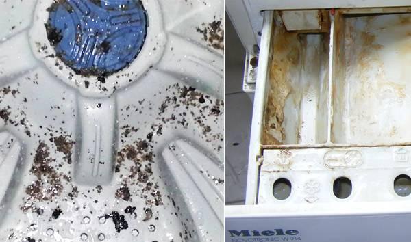 Черная плесень в стиральной машине: как от нее избавиться?