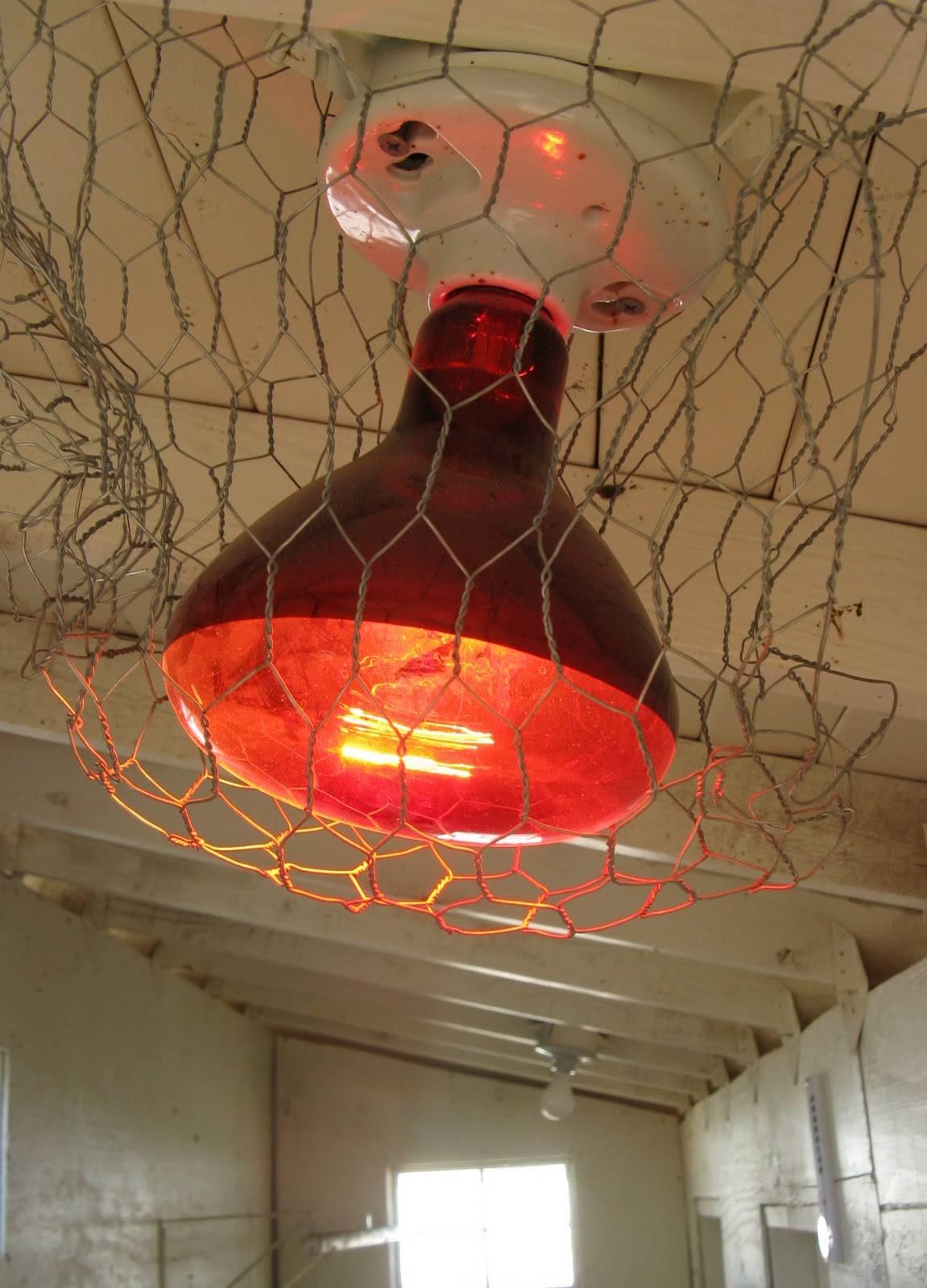 Обогрев курятника зимой: ик лампы, керамические