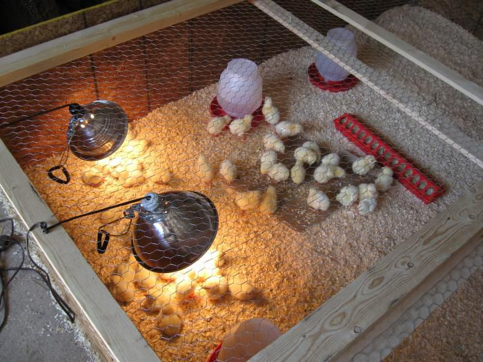 Приборы для обогрева цыплят: рекомендации опытных куроводов