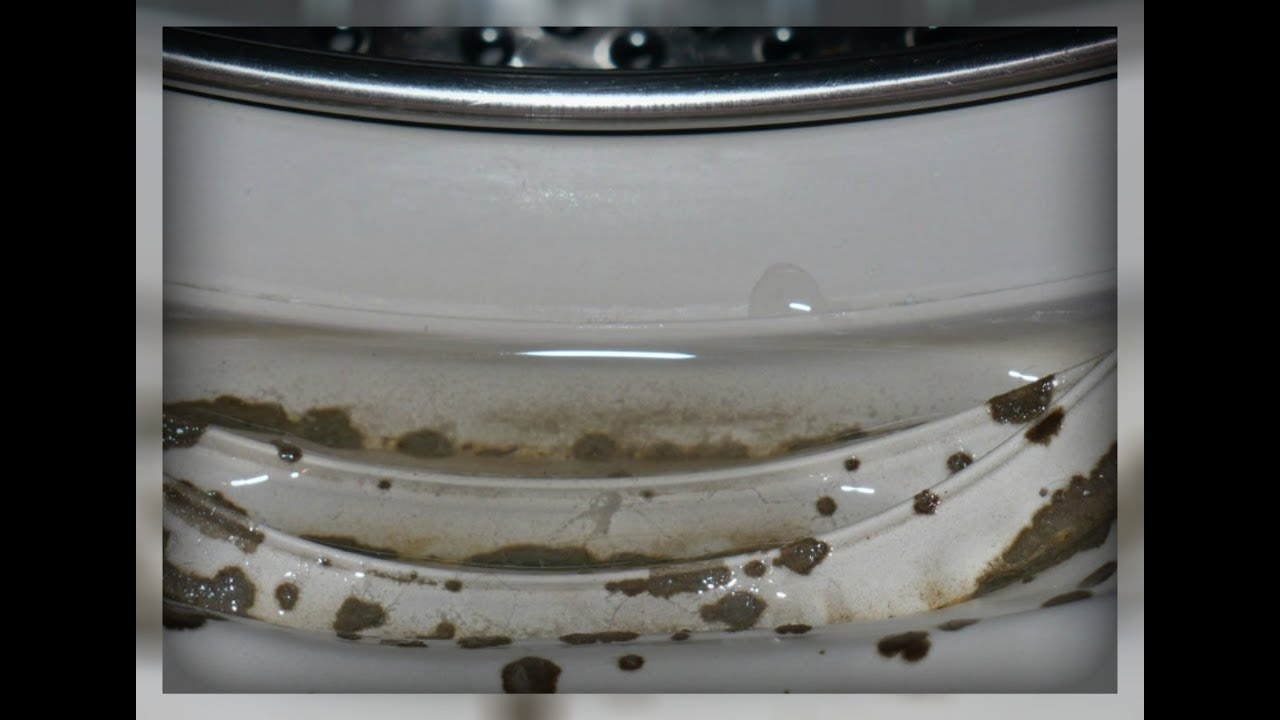Как очистить стиральную машину от плесени: рекомендации по очистке агрегата и профилактике появления грибка