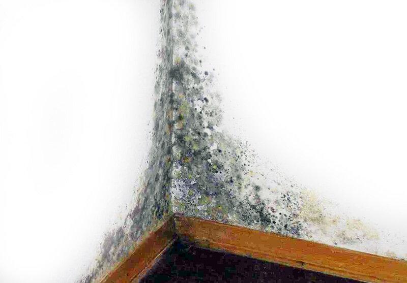 Низкая влажность в квартире - как увеличить показатели. жми!