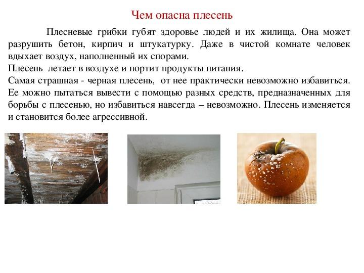 Чем опасны плесень и грибок на стенах и потолке в квартире, доме, как влияют на здоровье человека