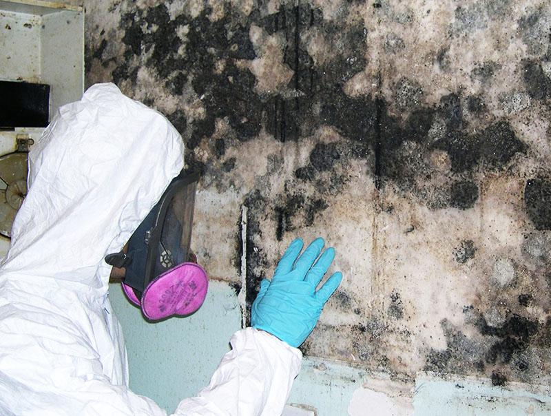 Черная плесень в доме: чем опасна для здоровья человека и как бороться