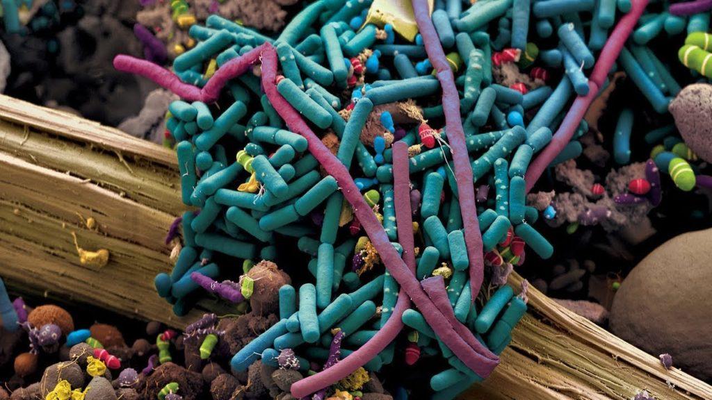 Сколько живут микробы на предметах