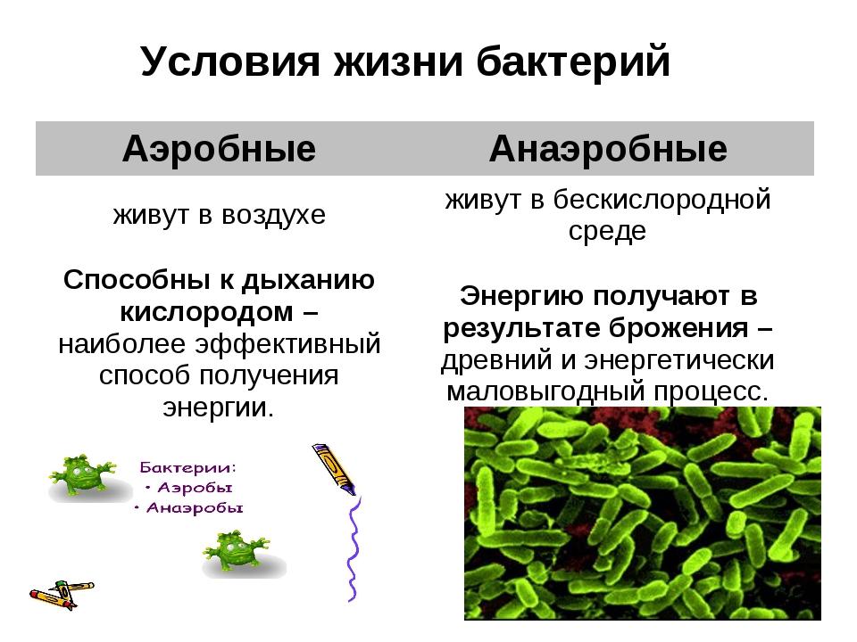 Бактерии для септика обзор, как правильно выбрать, рейтинг, отзывы