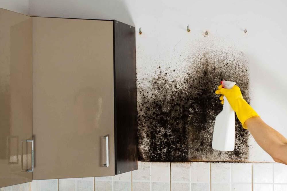 Топ-3 способа как избавится от грибка и плесени в помещение
