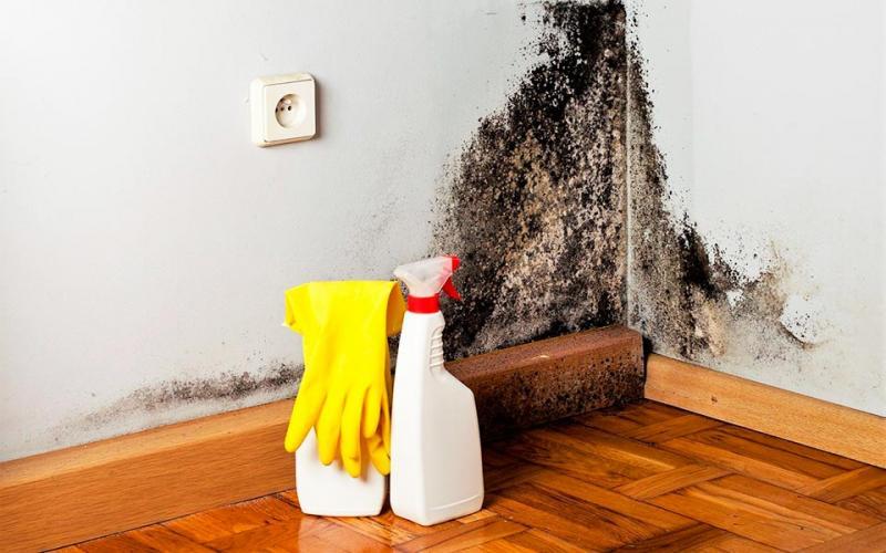 Черная плесень в ванной: как бороться