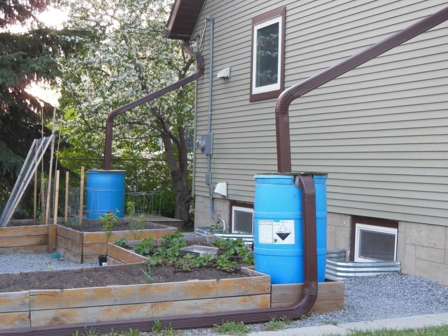 Сбор дождевой воды для полива: 3 критерия выбора