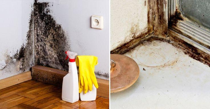 Как избавиться от влажности в квартире