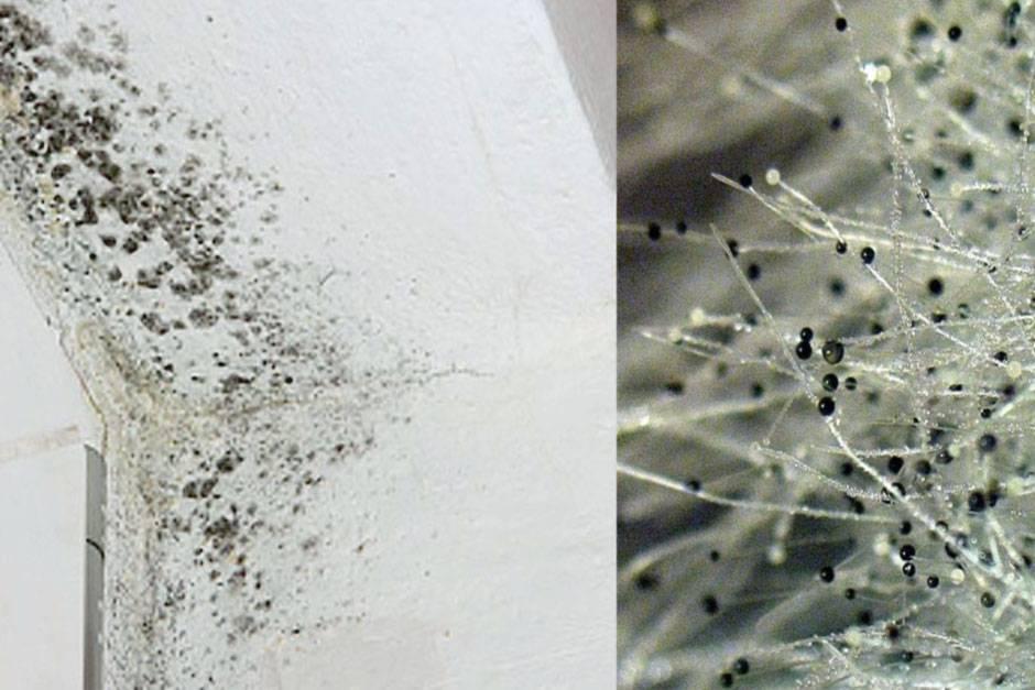 Как быстро и навсегда удалить грибок в ванной комнате