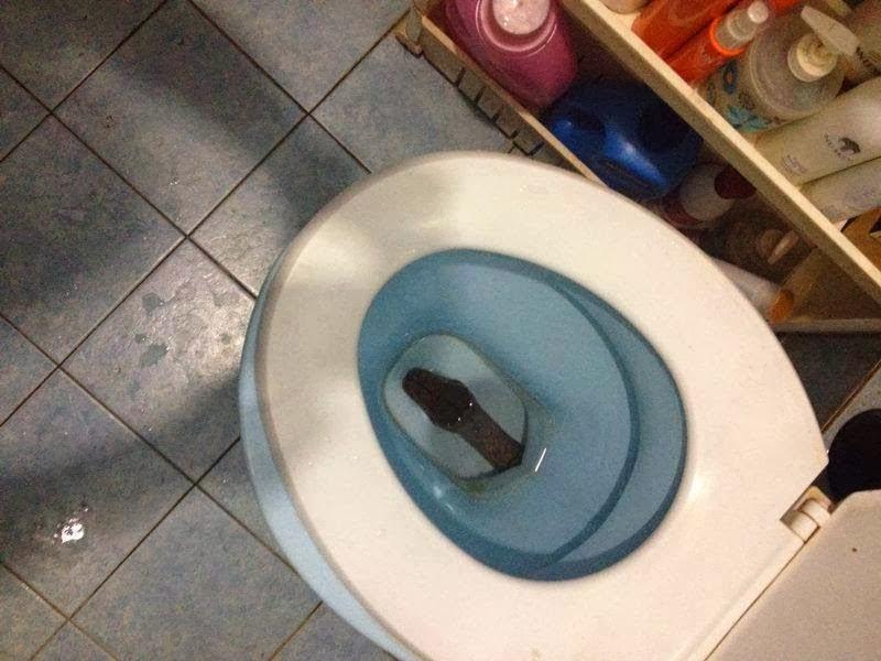 Что делать, если долго сидишь в туалете?