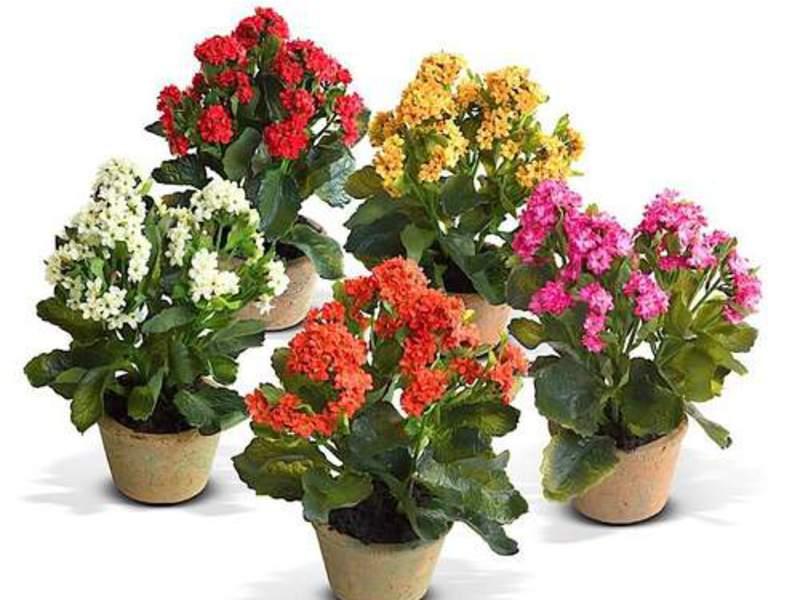Можно ли дома держать искусственные цветы — приметы и факты