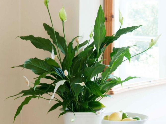 Можно ли держать дома искусственные цветы приметы