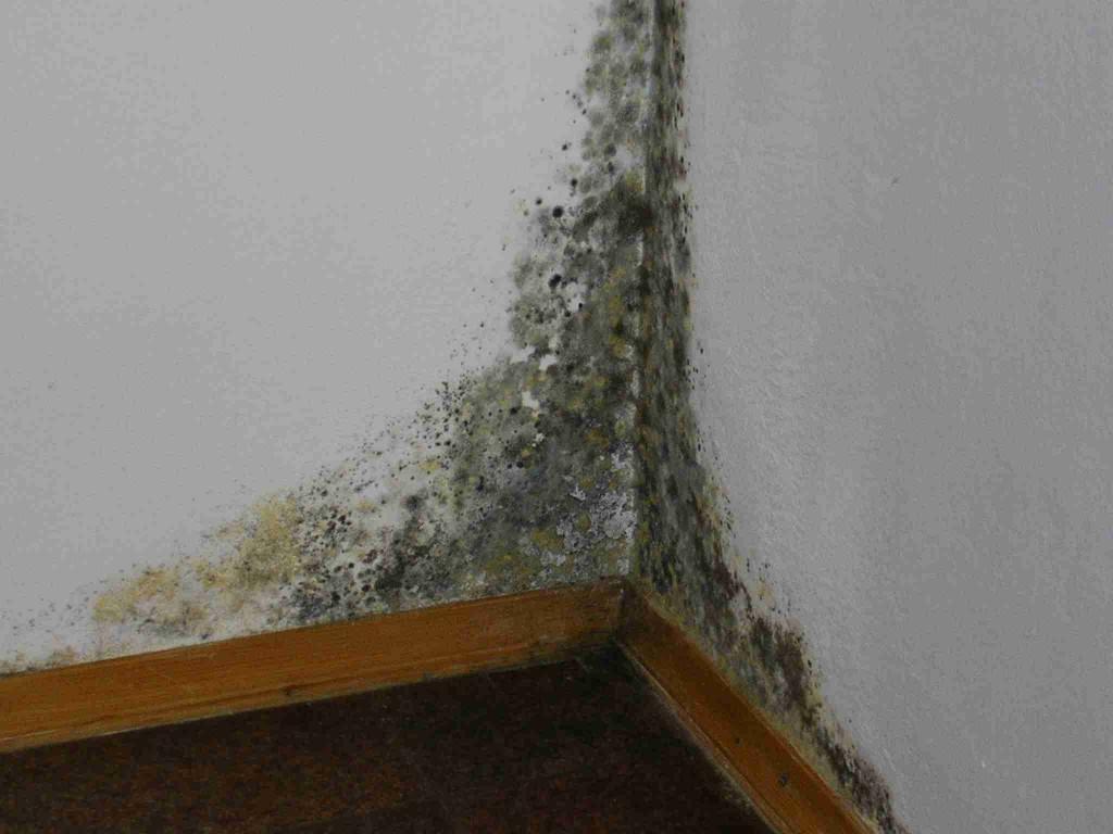 8 советов, как избавиться от сырости в квартире | строительный блог вити петрова
