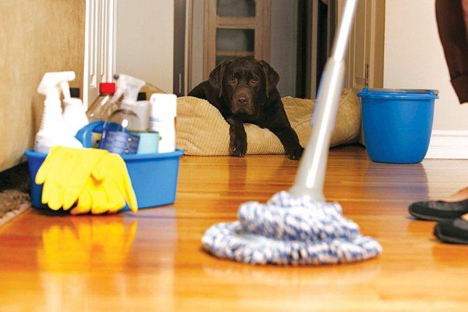 Как правильно мыть полы вручную и шваброй, чтобы не было разводов: советы для линолеума, ламината, паркета, кафеля