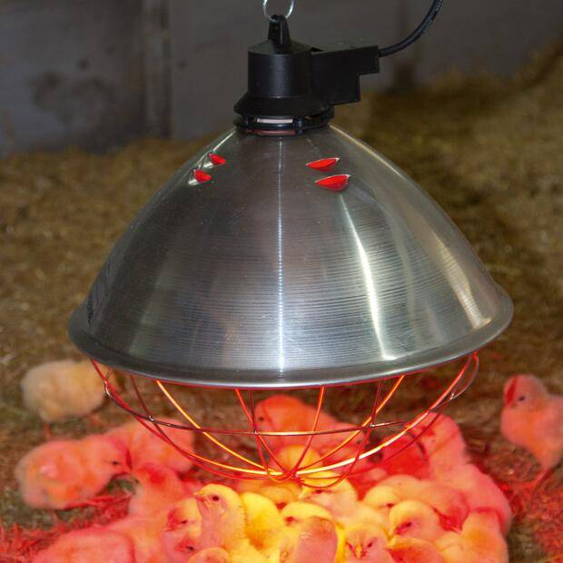 Брудер для цыплят и других птиц: назначение, устройство, критерии выбора, инструкция по изготовлению своими руками, обогрев, освещение
