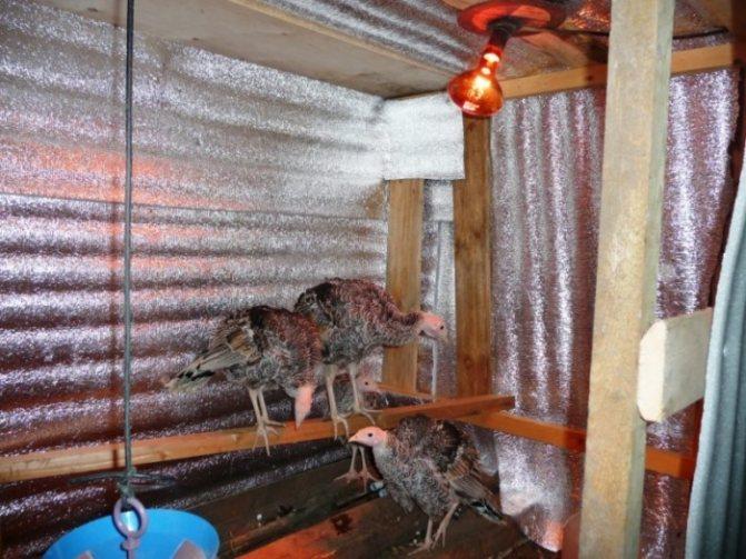 Обогрев курятника зимой: энергосберегающие обогреватели с терморегулятором, отопление недорого без электричества