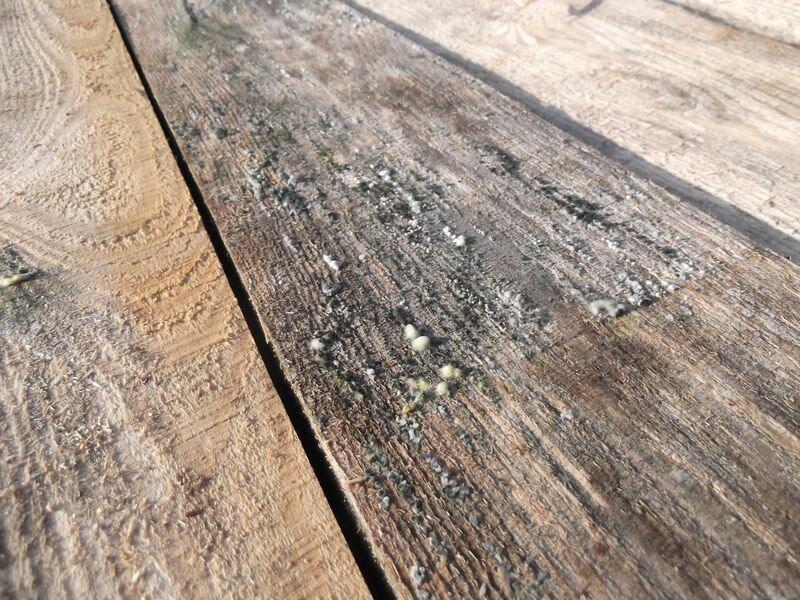 Как убрать плесень с деревянных поверхностей, избавить доски - точка j