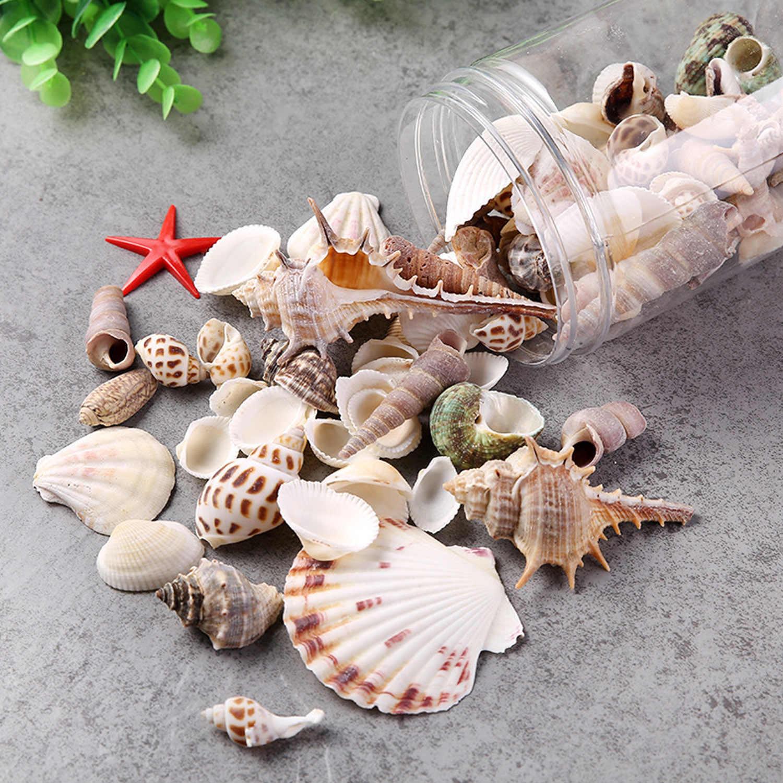Поделки из морских ракушек | материнство - беременность, роды, питание, воспитание