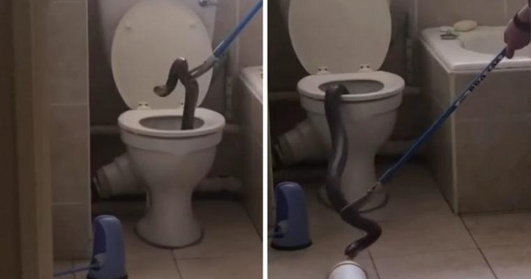 Как быстро сходить в туалет при запоре: лёгкие способы