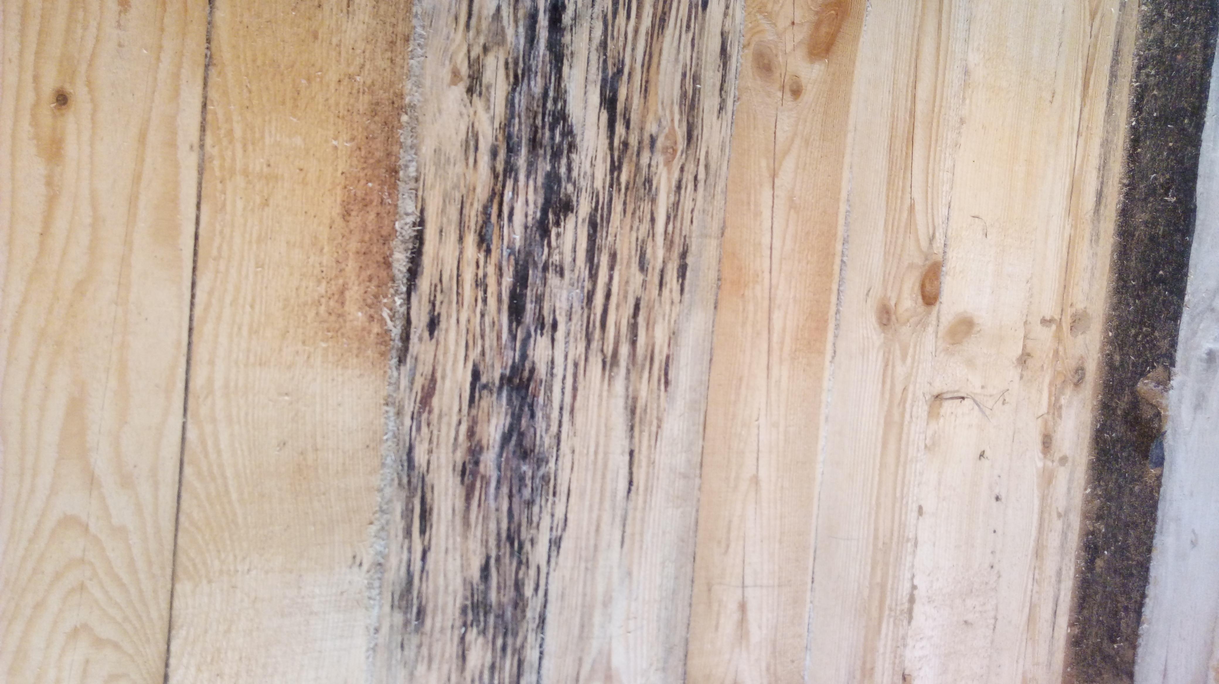 Как убрать плесень с деревянных поверхностей: простые советы
