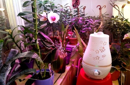 Как выбрать увлажнитель воздуха для квартиры и дома: какой лучше и почему