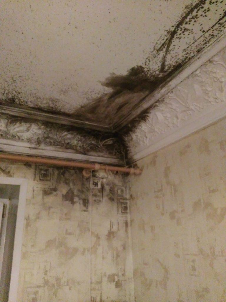 Повышенная влажность в квартире: причины появления плесени, как избавиться от сырости в комнате