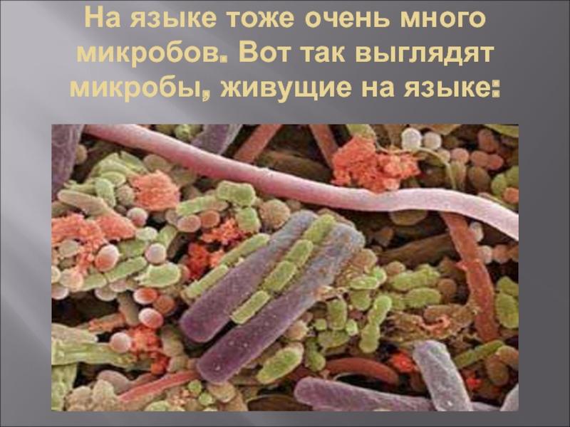 Типичные места обитания микробов: топ-10 самых грязных мест в доме