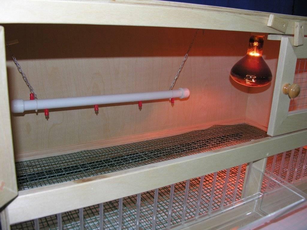 Как организовать грамотный обогрев курятника в зимнее время?