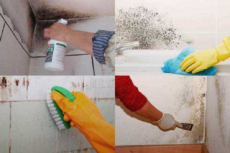 Как вывести грибок в ванной комнате - самые эффективные способы с инструкциями