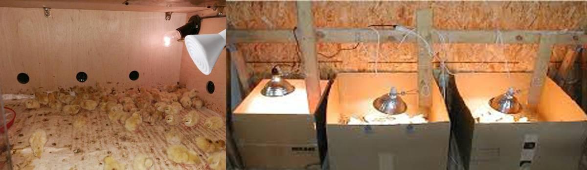 Брудер для цыплят: как сделать своими руками? 53 фото чертежи и размеры, таблица температур для выращивания бройлеров, варианты обогрева суточных цыплят, ящик с терморегулятором