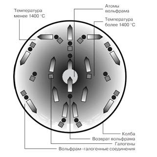 Виды, характеристики и советы по выбору галогенных ламп