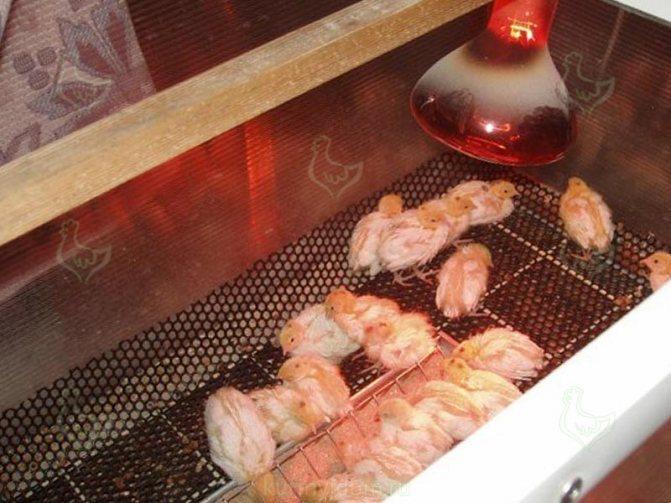 Обогрев курятника зимой способы отопления и подходящие виды обогрева