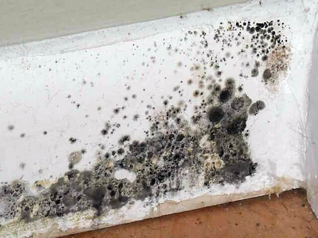 Черная плесень в доме, квартире: чем опасна, влияние на здоровье, как бороться