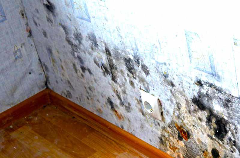 Как утеплить стену в квартире изнутри - жители холодного жилья всё время думают об этом. варианты есть и они вполне доступны