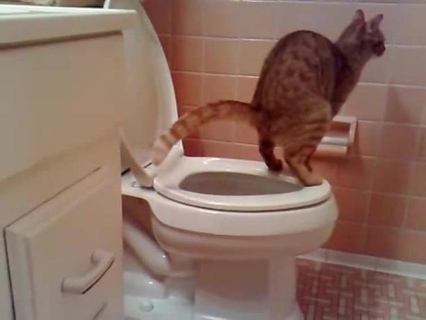 Как быстро сходить в туалет при запоре