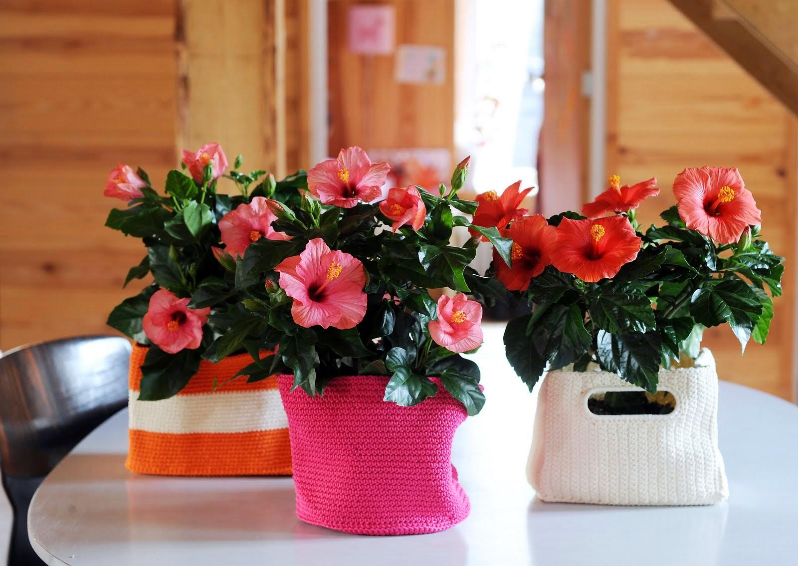 Неживые цветы в доме и приметы о них