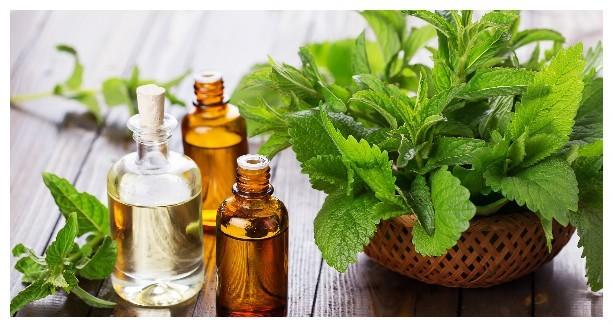 4 совета, как можно использовать мяту, чтобы в доме хорошо пахло свежестью
