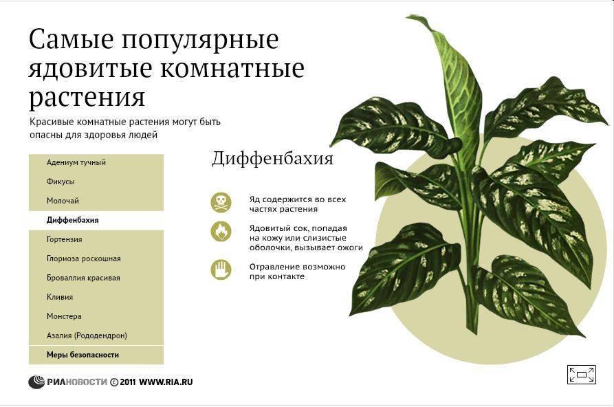 Миртовое дерево: приметы и суеверия, можно ли держать растение в доме, кому можно дарить и какие обряды проводить.
