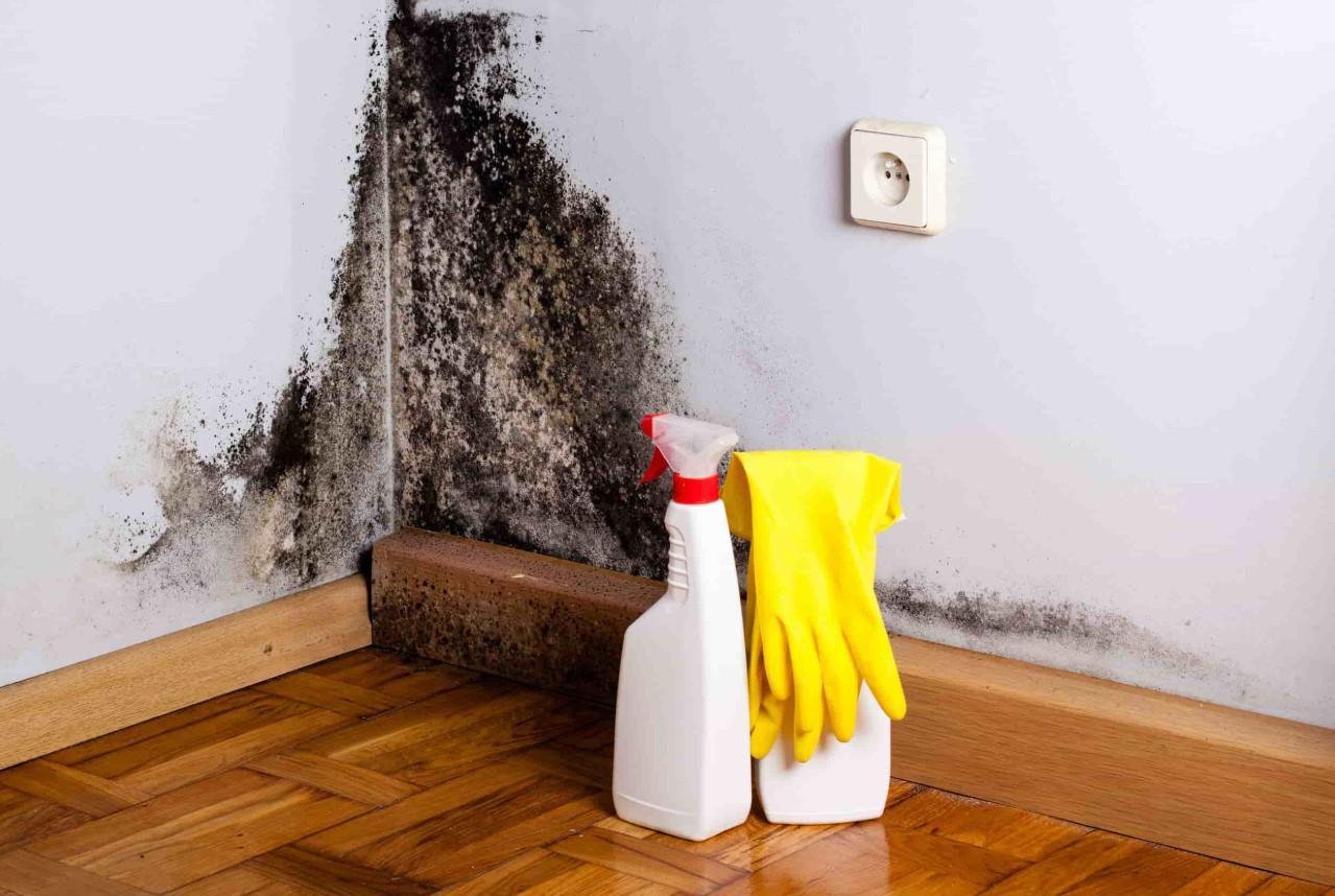 Повышенная влажность в доме: как избавиться, нормальные показатели и причины их нарушения | женский журнал читать онлайн: стильные стрижки, новинки в мире моды, советы по уходу