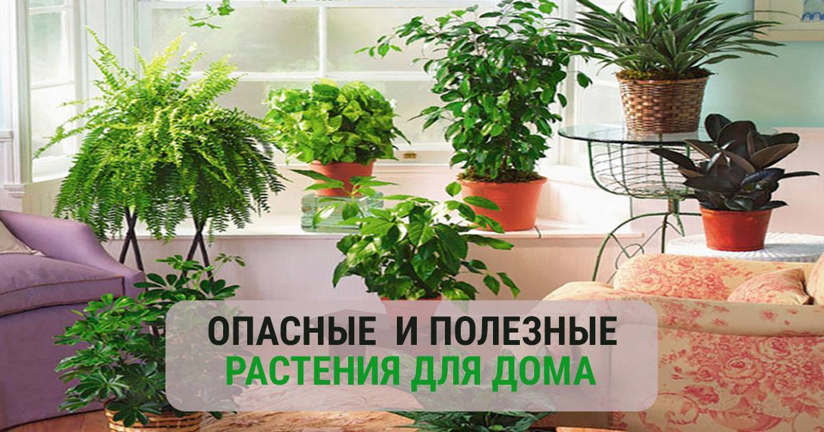 Приметы про цветы в доме — живие и искусственные