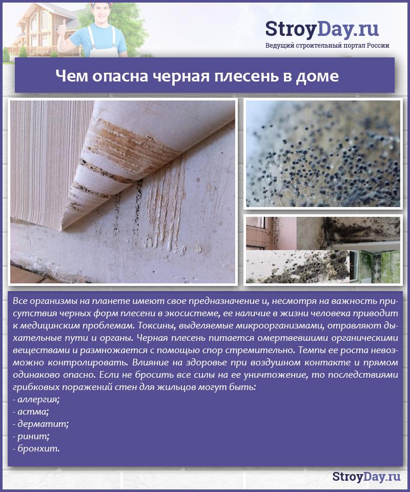 Грибок в квартире: чем опасен? вред и болезни от плесени на стенах