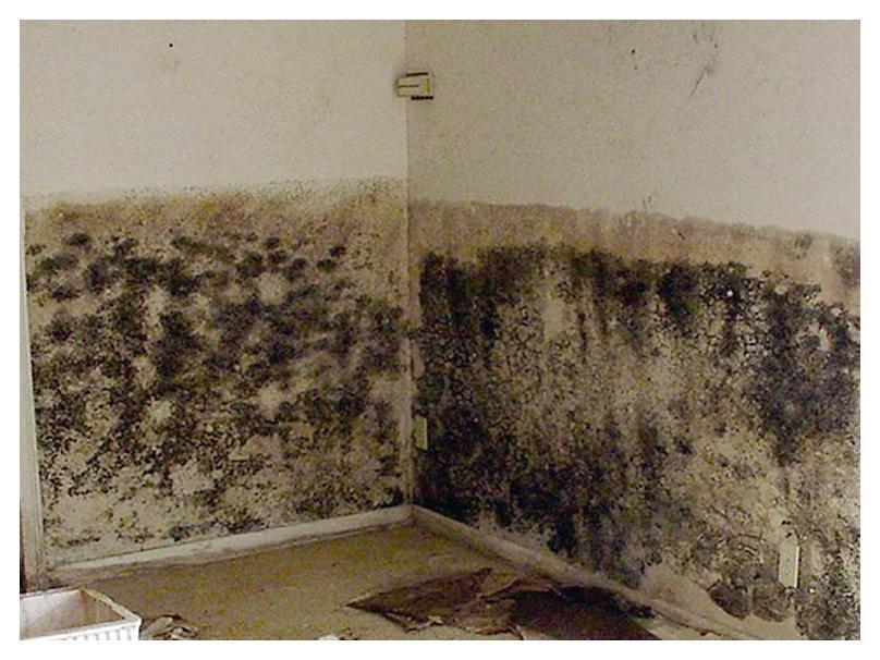 Чем опасна черная плесень в доме для организма человека и как от неё избавиться