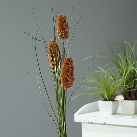 Приметы про комнатный плющ: можно ли держать дома, в квартире, суеверия про цветок